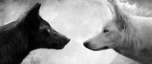 lobo_blanco_lobo_negro (1)