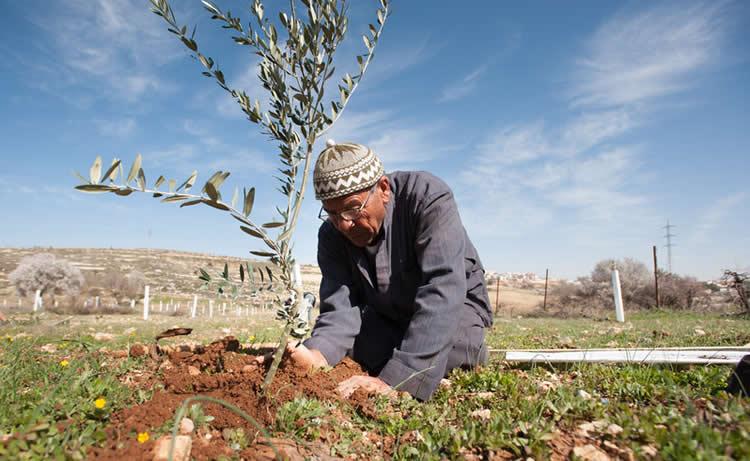 Olivo Simbolo resis p'alest ante ocup israeli