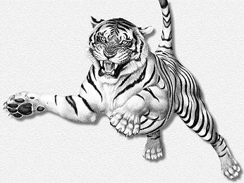 tigre-saltando2